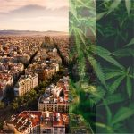 The Rise of Cannabis Clubs: Barcelona and Beyond
