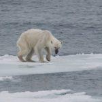 Kratom y calentamiento global