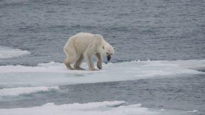Lee más sobre el artículo Kratom y calentamiento global