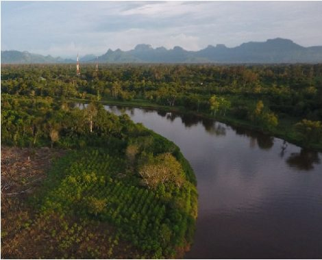 kratom-plantation-472x382.jpg